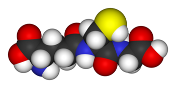 Space-filling model of the antioxidant metabolite glutathione. The yellow sphere is the redox-active sulfur atom that provides antioxidant activity, while the red, blue, white, and dark grey spheres represent oxygen, nitrogen, hydrogen, and carbon atoms, respectively.